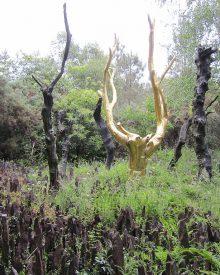 Brocéliande, la forêt mythique