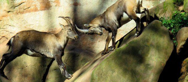 Des mammifères menacés : une urgence écologique