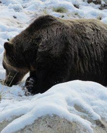Les animaux en hiver : les secrets d'une vie en suspens