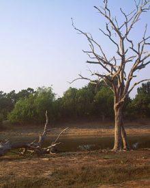 3 réserves naturelles à ne pas manquer au Sri Lanka