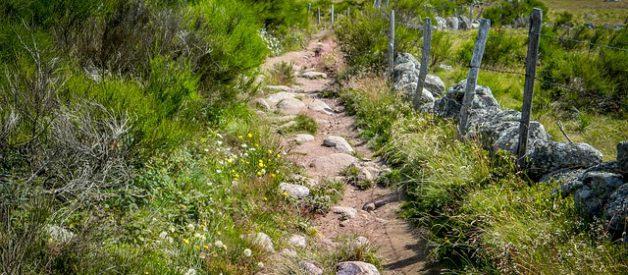 L'Aubrac, un plateau nature unique
