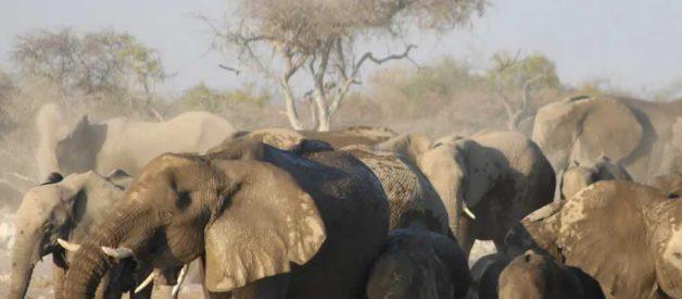 Découvrir les animaux sauvages de la Namibie et ses endroits intéressants