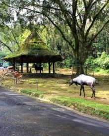 Voyage en Indonésie : top 3 des parcs animaliers à ne pas rater