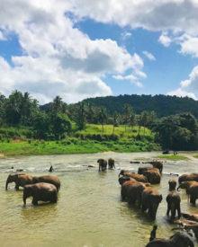 Le plaisir d'un circuit en train lors d'un voyage au Sri Lanka